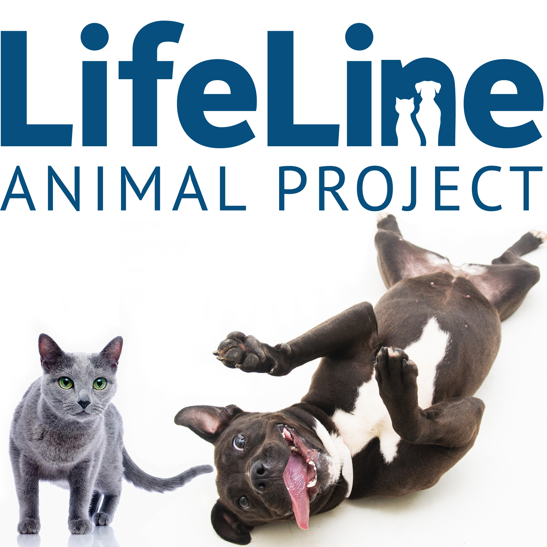 Join Us For A LifeLine Animal Project Charity Event ...
